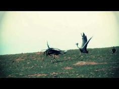 ▶ Learn To Fly by Christian Letruria - YouTube