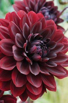 1000 images about plants we love on pinterest lipstick. Black Bedroom Furniture Sets. Home Design Ideas
