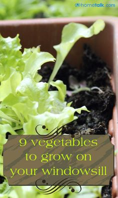 9 Vegetables to Grow on Your Windowsill!