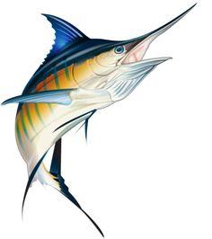 Blue Marlin, Private Collection of Coastal Properties International, Graphics Tablet Flower Line Drawings, Fish Drawings, Fish Under The Sea, Fish Sketch, Bass Fishing Shirts, Fish Artwork, Shark Art, Coral Art, Blue Marlin