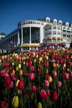 Grand Hotel Tulip garden - Mackinac Island, MI