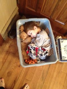 Nothing's more comforting than a basket full of puppies.