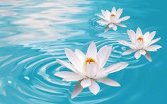 Lotus Flower Drawing Images Wallpaper - Abstract Powericare.com