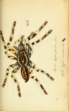 bd. 8-10 (1841-1843)