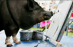 A painting pig