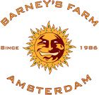 Barney's Farm Seed Company is a team of experienced Amsterdam-based breeders, renowned for creating unique and high quality cannabis strains.  Barney's Farm founder, Derry, spent several years in Asia and the Middle East, gathering and cultivating indigenous cannabis landraces, and since then Barney's Farm has become a research lab for collecting and creating fine and rare strains of marijuana.