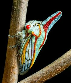 Oak Treehopper.....treehoppers come in a multitude of strange forms and colors and seem otherworldly in comparison to most insects.