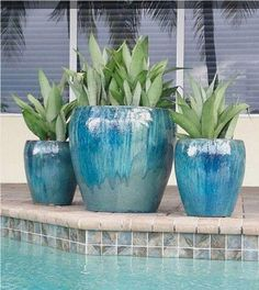 potted plants and trees for pool area Potted Plants Patio, Front Porch Plants, Potted Palms, Front Porches, Plants Around Pool, Pool Plants, Florida Landscaping, Outdoor Landscaping, Landscaping Ideas