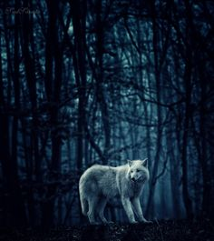 Espíritu de los bosques