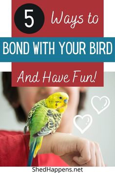 Budgies Care, Cockatiel Care, Animals And Pets, Cute Animals, Bird Gif, Playing Games, Cockatoo, Parakeet, Animal Memes