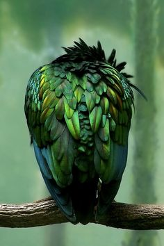 You couldn't imagine all those green tones on one bird - but here there are!