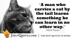 Enjoy these really funny quotes and sayings. They will give you a laugh. Also, check out our other awesome quotes categories. Really Funny Quotes, Feel Good Quotes, Best Quotes, Mark Twain Quotes, Feelings, Sayings, Learning, Cat, Google Search