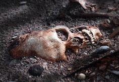 Funnet av to vikingskip og 41 døde vikinger i Estland reiser spørsmålet om når vikingtiden faktisk ble innledet. Kanskje var det 50 år tidligere enn vi har trodd til nå.