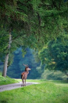 Forêt de Compiègne, Oise, Picardie, France