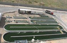 Algas para la elaboración de Biocombustibles