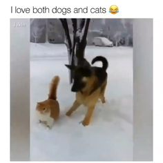 they are way better than cats - Funny Animals Animal Jokes, Funny Animal Memes, Funny Animal Videos, Funny Animal Pictures, Dog Videos, Cute Funny Dogs, Cute Funny Animals, Cute Baby Animals, Cute Cats