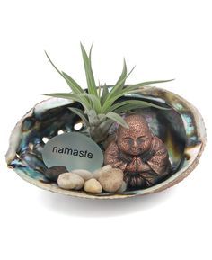 Feel as calm as the deepest parts of the sea with our ocean-inspired Happy Buddha terrarium, featuring a genuine abalone shell, real pebbles, and a Happy Buddha statue. Driftwood Art, Abalone Shell, Plant Care, Clay Creations, Air Plants, Frosted Glass, Crafts To Make, Im Not Perfect, Shells