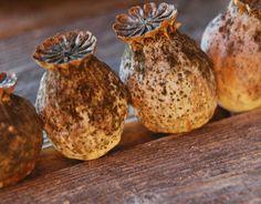 culinary poppy seeds