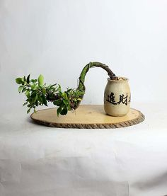 Ficus Bonsai Tree by LiveBonsaiTree by LiveBonsaiTree on Etsy