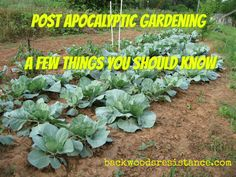 There's a lot more to gardening after the SHTF than just throwing a handful of seeds on a patch of dirt. A lifelong farmer explains in this article.
