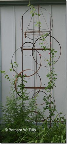trellis is 8 feet tall and was made from the steel rounds left from two half whiskey barrels