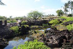 The Grounds at the Waikoloa Beach Marriott Resort