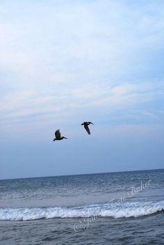Pelicans in Flight, 2013. Nikon D60
