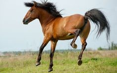 """Can they Be So Beautiful? Quick Look at """"The Magnificent Horses in the World"""""""
