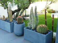 Cactus, Cacti And Succulents, Garden Planters, Pots, Garden Ideas, Creations, Exterior, Image, Gardens