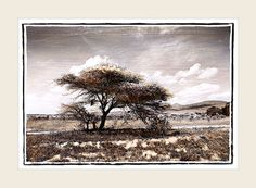 Take a visual safari. Explore the Southern African landscape. Fine Art Photography, Landscape Photography, Office Decor, African, Gallery, Painting, Beautiful, Unique Gifts, Landscapes