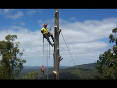 Tree Climbing and Tree Removal dropping out tree sections - YouTube