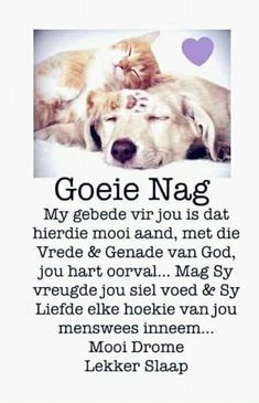 Good Morning Good Night, Good Night Quotes, Evening Quotes, Evening Greetings, Afrikaanse Quotes, Good Night Blessings, Goeie Nag, Good Night Sweet Dreams, Special Quotes