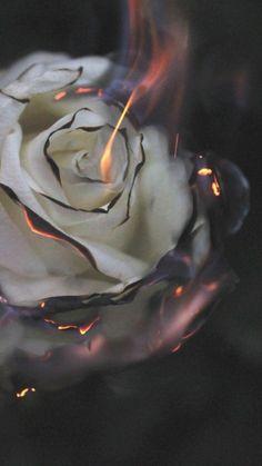 Rose Wallpaper, Black Wallpaper, Wallpaper Backgrounds, Aesthetic Pastel Wallpaper, Aesthetic Backgrounds, Aesthetic Wallpapers, Burning Flowers, Burning Rose, Home Tumblr