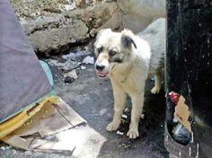 Câtă cruzime! Câine legat cu bandă adezivă, băgat într-un sac şi o cutie, apoi aruncat la gunoi Husky, Lifestyle, Dogs, Animals, Bag, Animales, Animaux, Pet Dogs, Doggies