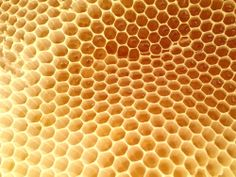 honey comb and warre hives