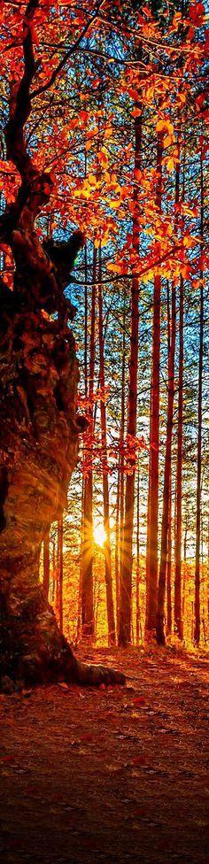 Pôr-do-sol na floresta.