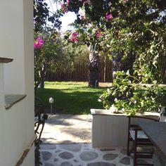 Morning view. Summer garden Morning View, Summer Garden, Sidewalk, Menu, Plants, Instagram, Menu Board Design, Side Walkway, Walkway