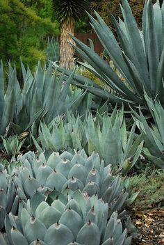 the Ruth Bancroft Garden, Photo: gardenbook-KS