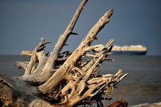 Driftwood Beach by Roxanne Kelly, via Flickr
