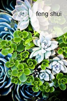 feng shui: increase prosperity with succulents