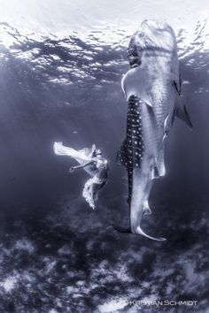 Extraordinary fashion shoot involves whale sharks, world's largest fish | GrindTV.com