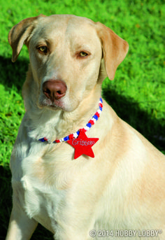 An easy-as-can-be necklace kit provides a fun way to add Independence Day style to your summer wardrobe. Make one for yourself, or craft one for your furry friend!