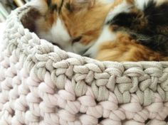 ao with <3 / crochet nest for that special kitty in your life