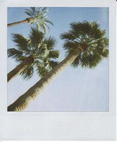 Palms #polaroid