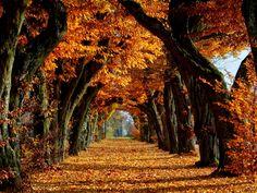 Herbst Bilder, avenue Hintergrundbilder, Langzeitvektor, Gold Bilder, Bäume…