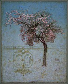 "deusxmaciswhack: "" art of the morning: david harrison-smith's plum tree intaglio, elegant and fine. """