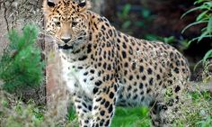 Cheetah - fastest of the big Cats  fastest land animal, I believe, but will check that on Google!