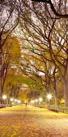 Take a trip just to people watch in #CentralPark.