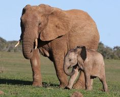 Elephant mama and baby (courtesy of Our World's View)