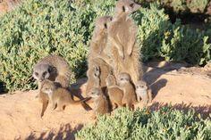 8 Healthy babies born! Gang Up, Baby Born, Big Family, Mammals, Habitats, Kangaroo, Babies, Adventure, Healthy